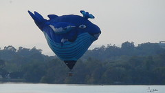 Blue Whale over the lake (spelio) Tags: water festival mar hotair balloon australia canberra act 2016 lakeburleygriffin