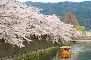 岡崎・琵琶湖疏水の春 / Kyoto Okazaki Spring