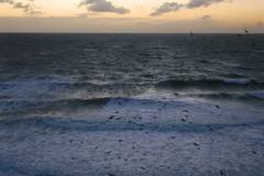 DSC_0134 (Rolf Lawrenz) Tags: beach sunsetsunrise feralpigeoncolumbalivia