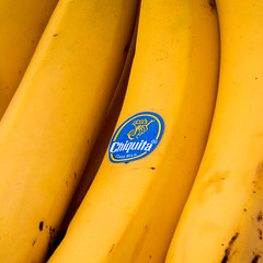 Blue Banana Belly Button (jopperbok) Tags: jopperbok 7dos 7daysofshooting 7daysofschooting 7 banana bananas advertising brand branding contrast yellow blue twocolours two colour colours color colors text chiquita white square fruit food fooddrinks minimal minimalism challengeclubchampion nature