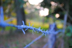 Bodacious Barbed Barrier (Gio-Photography) Tags: nikon dslr users d3000