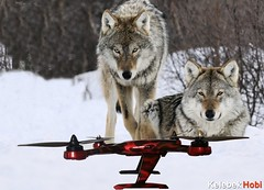 quadcopter-racer-brushless-runner-hd-camera (kelebekhobi) Tags: oyuncak ucuz brushless quadcopter fpvquadcopterfiyat fpvquadcoptergoggles