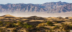 Mesquite Sand Dunes - Panorama (lycheng99) Tags: sunset shadow panorama sun mountains contrast sand wind dunes curves mesquite sandstorm sanddunes mesquitesanddunes panoramicview