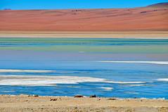 Bolivia- altiplano (venturidonatella) Tags: panorama latinamerica colors america landscape emotion bolivia lagoon laguna colori altopiano altiplano emozioni d300 nikond300