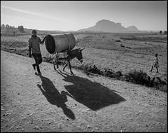 Shadow and donkey (nahlinse) Tags: street people film animal iso100 donkey ethiopia fujineopanacros fujineopanacros100 film:brand=fuji film:iso=100 developer:brand=adox film:name=fujineopanacros100 adoxadonal developer:name=adoxadonal filmdev:recipe=9369
