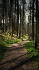 Pathway Through the Pines (Mark.L.Sutherland) Tags: cameraphone trees green grass lines walking shadows path north cellphone samsung sunny smartphone tall straight sutherland footpath pinetrees pathway publicfootpath strathpeffer rossshire rogiefalls phoneography throughthepines androidography galaxys5