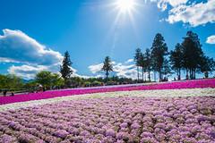 LHM_0118 (Leo Hartadi) Tags: park nature japan landscape saitama chichibu seibu