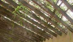 Arboles y madera (imageneslibres) Tags: naturaleza verde hojas madera flora marron follaje techo ramas glorieta tirantes