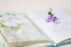 J'peux pas t'oublier (eleni m (sorry if I can't keep up)) Tags: plant flower macro book poetry pages drawing pastel text indoor frans campanula francais boekje bloem tekening tekst pozie bladzijden