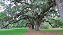 chelsea1 (babyfella2007) Tags: county old trees house jason tree brick history sc nature beautiful architecture river garden design living moss oak alley chelsea gun jasper live south large style historic southern spanish coastal plantation taylor carolina broad beaufort ridgeland