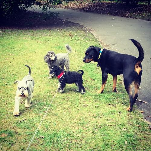 Moo + friends