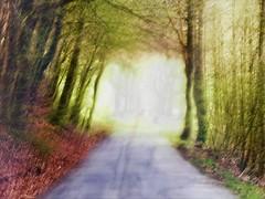 ICM  III/III (broombesoom) Tags: street wood forest germany deutschland digitalart rue wald allemagne fort icm postprocessing hss strase awardtree netartii