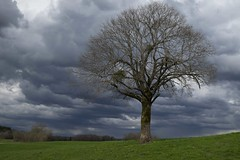 L'adversit -* (Titole) Tags: tree nicolefaton titole sky clouds stormy thechallengefactory