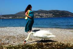 Happiness on its way.... (Maria Michalinos-www.debop.gr/deBlog/the-athenians) Tags: blue sea sky woman white bird love beach nature beautiful animal swan peace athens pregnant portorafti avlaki canoneos7d   ilobsterit