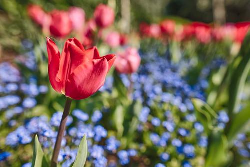 Spring in Offenburg park