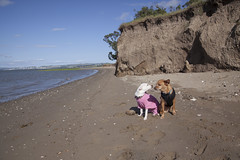 Pt. Pinole Beach (Ellen Soohoo) Tags: dog pine point bay spring district parks hike richmond east oki regional pinole 2016 ebparksok