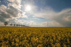 Rapsfeld (Nicola G. Fotografie) Tags: sun clouds canon countryside spring colours pflanze feld himmel wolken rape gelb april fields 1018 sonne raps yello canola farben frhling oilseed rapsfeld nutzpflanze