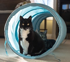 We are camping (Tracey Rennie) Tags: camping cats tunnel molly cooper