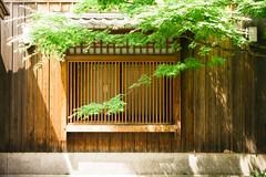 A Frame of Green (sunnywinds*) Tags: leica kyoto momiji      summiluxm11435mmasph