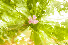 Summer feeling zoomburst (happad fotografie) Tags: pink abstract motion green garden colorful bright fade zoomburst centerd