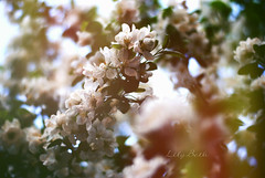 - (-LilyBeth) Tags: primavera nature colors outside spring nikon dof bokeh natura depthoffield wonderfulworld d3000