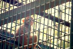 Prison Life - III (Rafee Mizan Khan Chowdhury Niloy) Tags: people nature canon garden botanical zoo wildlife photowalk dhaka mirpur 70d