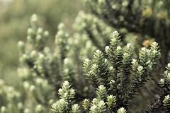 Agulhas negras (josemarcos.paluello) Tags: branco riodejaneiro natureza preto e montanha resende agulhasnegras flres sobra parquenacionaldoitatiaia