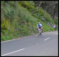 Tour of Nilgiris Cyclist (Indianature st2i) Tags: road india december cyclist tea tamilnadu westernghats teaestate 2016 mountainroad 2015 valparai cyclerace indianature ghatroad anamalais indiragandhiwildlifesanctuary tourofnilgiris anamallais anamalaitigerreserve