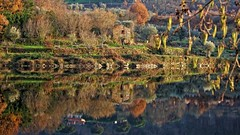 I call them witch houses :) (CarlaFrancisco) Tags: winter reflection tree folhas portugal water leaves rio gua canon river eos photo flickr foto fallcolors foliage photograph fotografia dslr inverno reflexion rvore reflexo cf fallcolours viseu autofocus northernhemisphere folhagem efs1785mm efs1785 canonefs1785mmf456isusm 40d penalvadocastelo coresdeoutono canoneos40d canon40d digitalsinglelensreflex carlafrancisco takenindecember riodo hemisfrionorte infinitexposure takenin2015 copyright2015carlafranciscoallrightsreserved