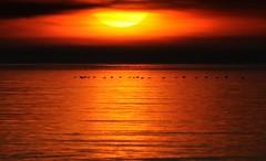 Evening Flight - explore 11. Jan. 2016 (Nephentes Phinena ☮) Tags: sunset twilight sonnenuntergang northsea dämmerung nordsee stpeterording