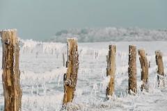 Frost total II (Don Bello Photography) Tags: schnee winter sepia frost raureif 1000views norddeutschland niedersachsen 2016 northerngermany salzwiesen 2000views acdsee 3000views dnenhof 100favorites weidenzaun 50favorites teiltonung 150favorites lumixphotographer donbello panasonicphotographer cuxhavenberensch reinhardbellmann panasonicfz1000 lumixfz1000 donbellophotography acdseeultimate9