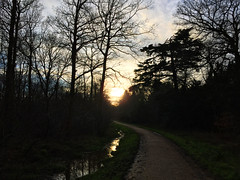 Sundown In The Forest (Marc Sayce) Tags: park sunset forest downs sundown alice south hampshire surrey national holt farnham the in sdnp