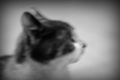 Cat in motion (Marilyn L.D. - Through My Lens) Tags: blackandwhite blur monochrome animal cat blurry blurred blurredmotion