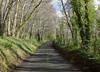 P1000004 (edmundrt) Tags: trees green forest lumix somerset panasonic lx7 lumixlx7 dmclx7