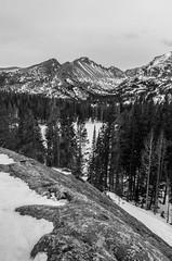 Rocky Mountain National Park (Tims.Travels) Tags: park trees winter blackandwhite bw mountain snow mountains nikon colorado rocks mount