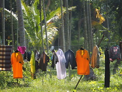 Doing Laundry in Paradise - Southern Thailand, Nakhon Si Thammarat Province (c) (hn.) Tags: thailand dress grove south rope line palmtrees laundry palmtree clothesline palme washing wsche coconutpalm nakhonsithammarat cocotier kleidung garment washingline palmen hain palmgrove klai wscheleine sden coconutpalms provinz southernthailand kokosnusspalme kokospalme souththailand wschetrocknen coconutpalmtree sdthailand palmenhain clotheslinerope nakhonsithammaratprovince coconutpalmgrove chanwatnakhonsithammarat chanwatnakhonsrithammarat sdregion nakhonsrithammaratprovince provinznakhonsithammarat provinznakhonsrithammarat chanwat