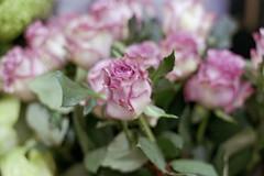 P_fuji2winter0024-2 (kidory18) Tags: flowers london 35mm pentaxmesuper filmisnotdead fujicolorsuperiaxtra400