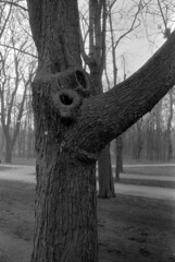 2016-02-09-0005 (Bi&Me) Tags: tree baum prater 50iso minoltaxd7 praterallee polypanf35mm