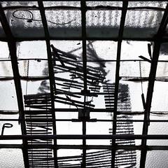 Laissez entrer le soleil (Gerard Hermand) Tags: paris france glass canon decay greenhouse pane glasshouse verre vitre serre auteuil dcrpitude formatcarr eos5dmarkii gerardhermand 1206222835