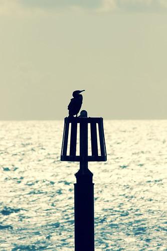 Coastal perch