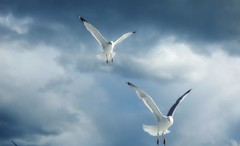We have Today..... (guarnc) Tags: winter seagulls massachusetts cape cod