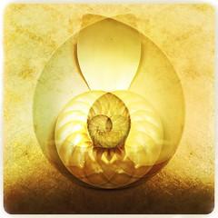 nautilus (Kathy Carey) Tags: shell nautilus iphone hipstamatic salvadorlens maximusfilm