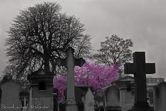 Contrasto colore al Cimitero di Montmartre.jpg (frillicca) Tags: 2015 bn bw cemetery cimitero cimiterodimontmartre croci cross march marzo montmartre montmartrecemetery parigi paris îledefrance francia