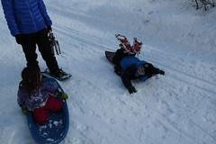 Olsen sledding down the trail 1 (Aggiewelshes) Tags: winter snow lisa sledding snowshoeing february olsen jovie 2016 greencanyon