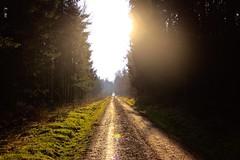Impressionen aus einem Waldlauf (alexschneider72) Tags: wood city blue red sky snow water germany stars happy bayern deutschland wasser nacht sommer tag natur himmel wolken berge pilze holz sonne wald frhling schlamm friedberg waldweg kiesweg nachmittag pftzen steinweg