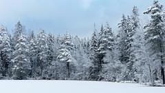 A view from the SE corner of Lake Ruuhijrvi (Nuuksio national park, Espoo, 20160213) (RainoL) Tags: winter sky lake snow pine forest espoo finland geotagged nationalpark february fin 2016 uusimaa nyland esbo velskola ruuhijrvi nuuksionationalpark nuuksionkansallispuisto 201602 vllskog 20160213 geo:lat=6031022345 geo:lon=2457263947