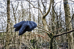 What happens in some countries when Cookie Monster is caught stealing cookies... (Gavmonster) Tags: uk blue trees abandoned landscape furry nikon unitedkingdom outdoor somerset glove cookiemonster stealing velvetbottom mewantcookie d7000 nikond7000 meeatcookie gswphotography