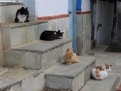 Skiathos cats