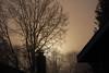 Foggy afternoon, Hillsboro Oregon (nikname) Tags: fog foggydays treesinfog