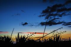 Camino al volcn de La Caldereta - Ingenio - Gran Canaria - ROF7889-20160420w (Fotgrafos en Canarias) Tags: sun tourism sol grancanaria clouds landscapes sunsets canarias nubes cielos atardeceres sunrises heavens turismo canaryislands puestasdesol islascanarias ocasos amaneceres paisajescanarios fotosdecanarias villadeingenio canaryimages municipiodeingenio paisajesdegrancanaria canarias3d imgenescanarias paisajesdecanarias canarianlandscapes landscapescanaries photoscanary